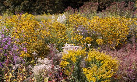 A Sea of Flowers by Ulrike Adam