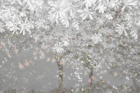Spring by Nel Talen