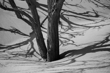 <i>Acacia</i> Shadows by Ron Tear