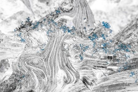 Dead Wood and Lichens by Fan Yi