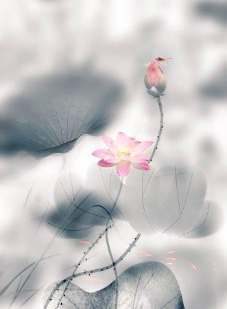 Lotus Pond by Yongkang Li