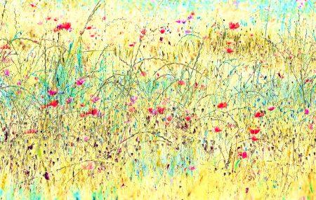 Poppies I by Giuseppe Bonali