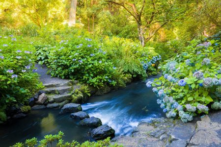 Stepping Stones in a Fast Stream by Joe Wainwright