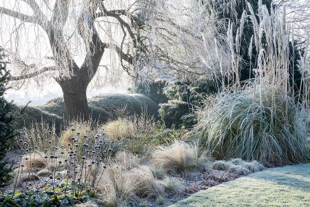 Frosted Morning by Marianne Majerus