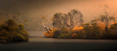 Dancing Trees by Swapnil Nevgi