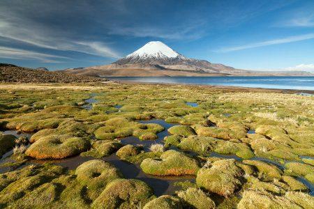 The Carpet of the Volcano by Alessandro Gruzza