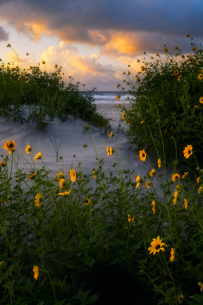 Beach Sunflower by Rajesh Jyothiswaran