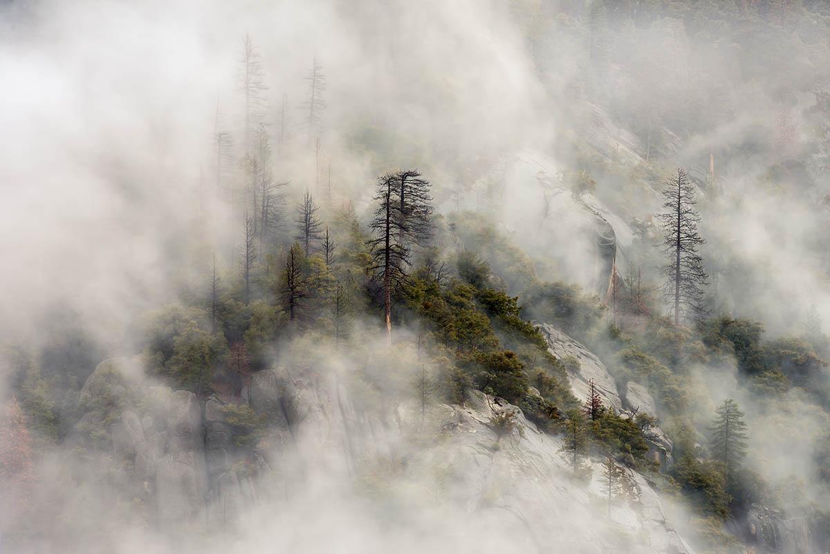 Foggy by Brandon Yoshizawa