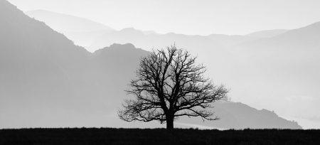 Solitary Oak Tree by Jon Martin