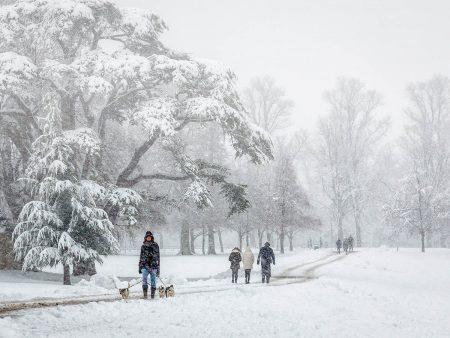 Snowy Walk by Maggie Bullock