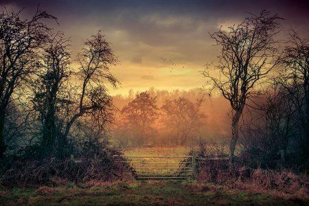 Gate by Kyle Parr