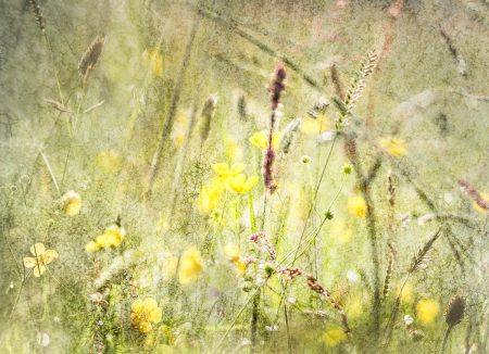 Summer Morning in Pye Flatts by Wendy North