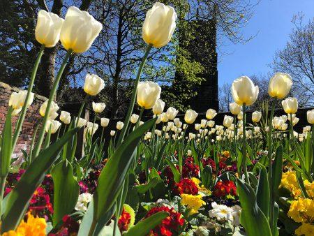 Barnsley in Bloom by Paul Leeuwerke