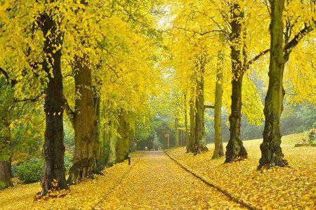 Autumn Avenue by John Gregson