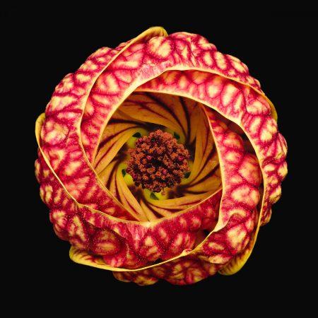 Vortex Blossom by Bruno Militelli