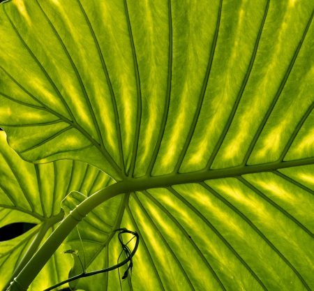 Leaf Structure by Dinah Jayes