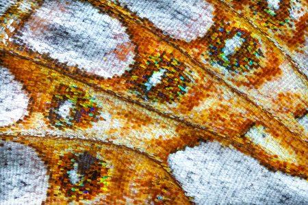 Butterfly Wing V by Petar Sabol