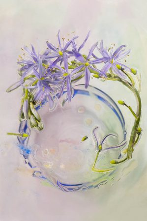 <i>Camassia</i> after the Rain by Marie Phelan