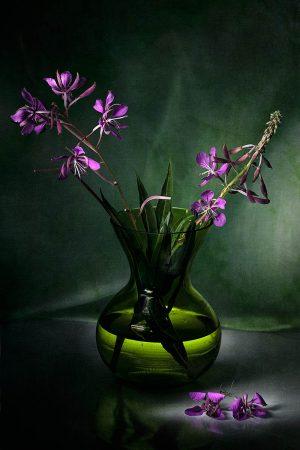 Rosebay Willowherb by Bente Klevenberg