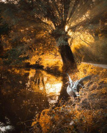 Autumn Walk by Sam Green
