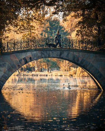 Autumn Bridge by Sam Green