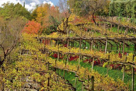 Vineyard by Albert Ceolan