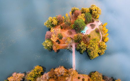 Magic Tree by Yevhen Samuchenko