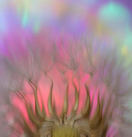 Dandelion Crown by Mary Jo Gomez-Jackson