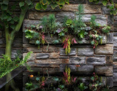 Garden Wall Reflections by Kathleen Furey