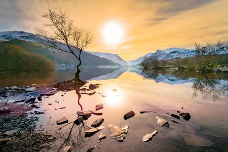 The Lone Tree by Stephen Bell
