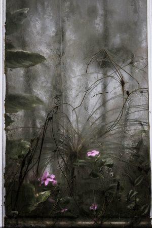 Glasshouse by Deborah Le Palud