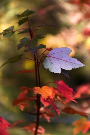 Three Colours of Autumn by Marina Chrysou