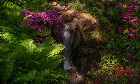 Hidden Gem in the Japanese Garden by Evgeniya Vlasova