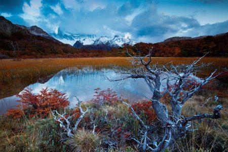 Autumn Frame by Denise Marcon