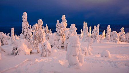 Snow Laden Trees by Jon Martin