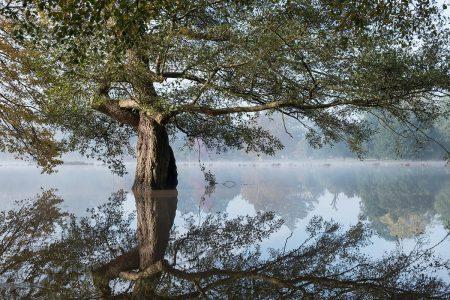 Paradise Flooded I by Christine Harding