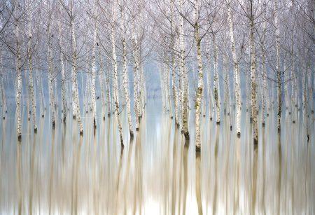 Flooding Birches by Gianluca Gianferrari