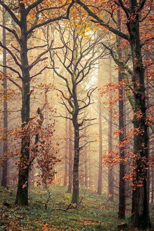 Mortimer's Tree by David G. Jones