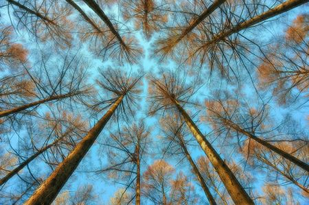 Looking Up Inside the Woods by Rory McDonald