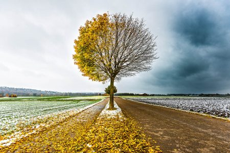 The Autumn-Winter Tree by Clara Wanjura