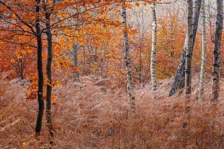 Peaceful Autumn by Benoit De Boeck