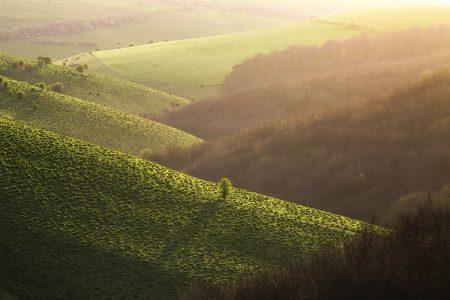Golden Hills by Martin Dolan