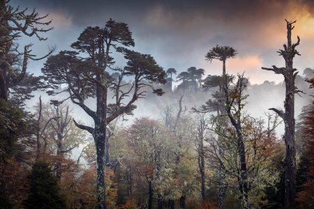 The Lost World by Andrea Pozzi