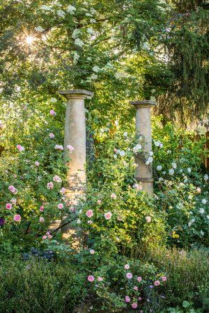 Rose Garden by Manuela Göhner