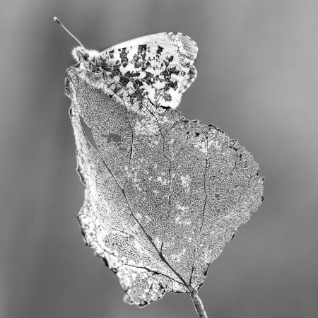 Leaf and Butterfly by Petar Sabol