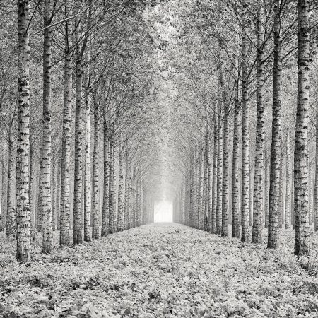 Strictly Aligned by Pierre Pellegrini