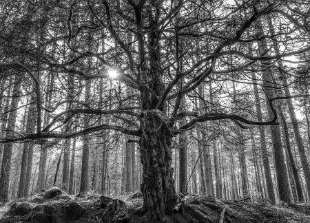 Against the Grain by Rory McDonald