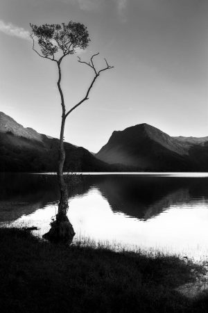 Lakeside Tree by Timothy Burgess