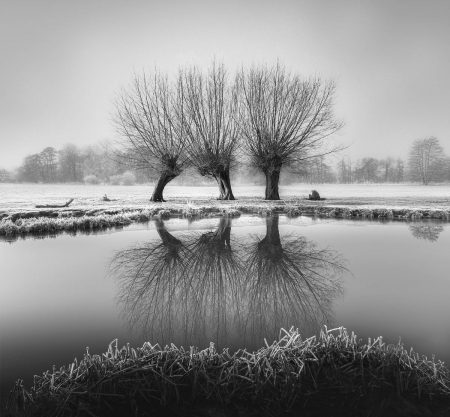 Willows in Winter by Timothy Burgess