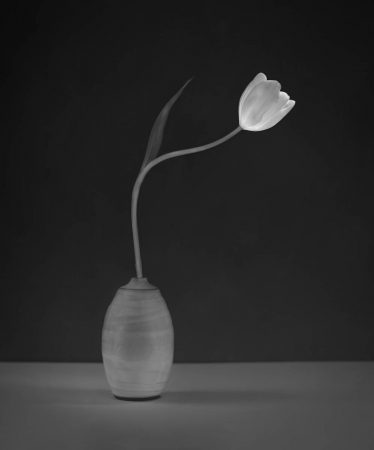 Tulip in My Father's Vase by Molly Hollman
